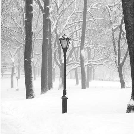 Lamp Post - Central Park