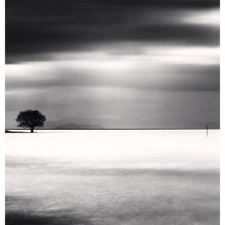Biwa Lake Tree, Study 5, Omi, Honshu, Japan