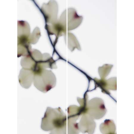 Dogwood (White, Red Tips) No.2