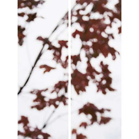 Sugar Maple Flutters (Red), 2007