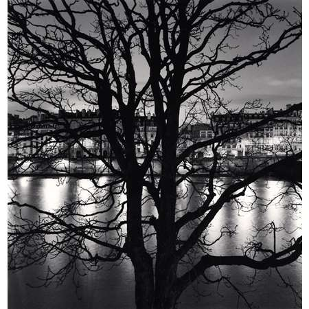 Tree, Seine, Quai Voltaire, Paris, France
