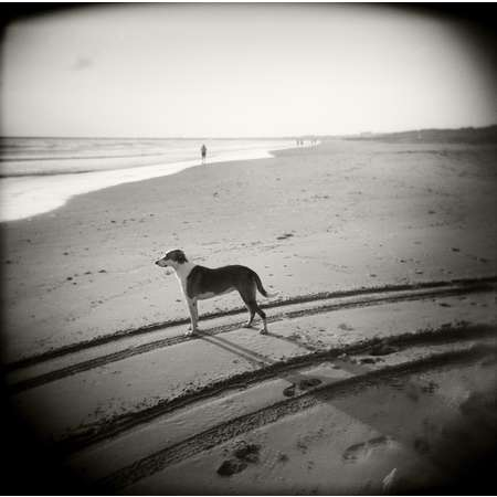 Surfer's Dog, South Padre Island, 2001