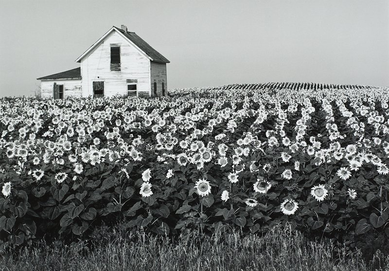 Henry Gilpin, House in Sunflower Field, 1994, Catherine Couturier Gallery