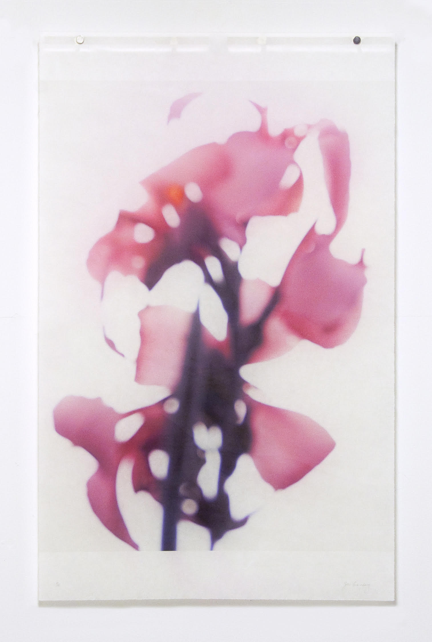 Jeri Eisenberg, Canna, No.2, 2020, Catherine Couturier Gallery