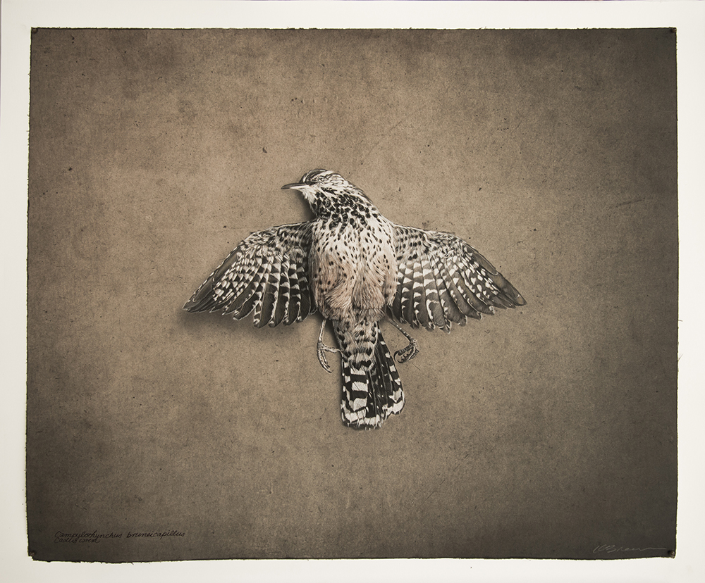 Kate Breakey, Cactus Wren, Catherine Couturier Gallery