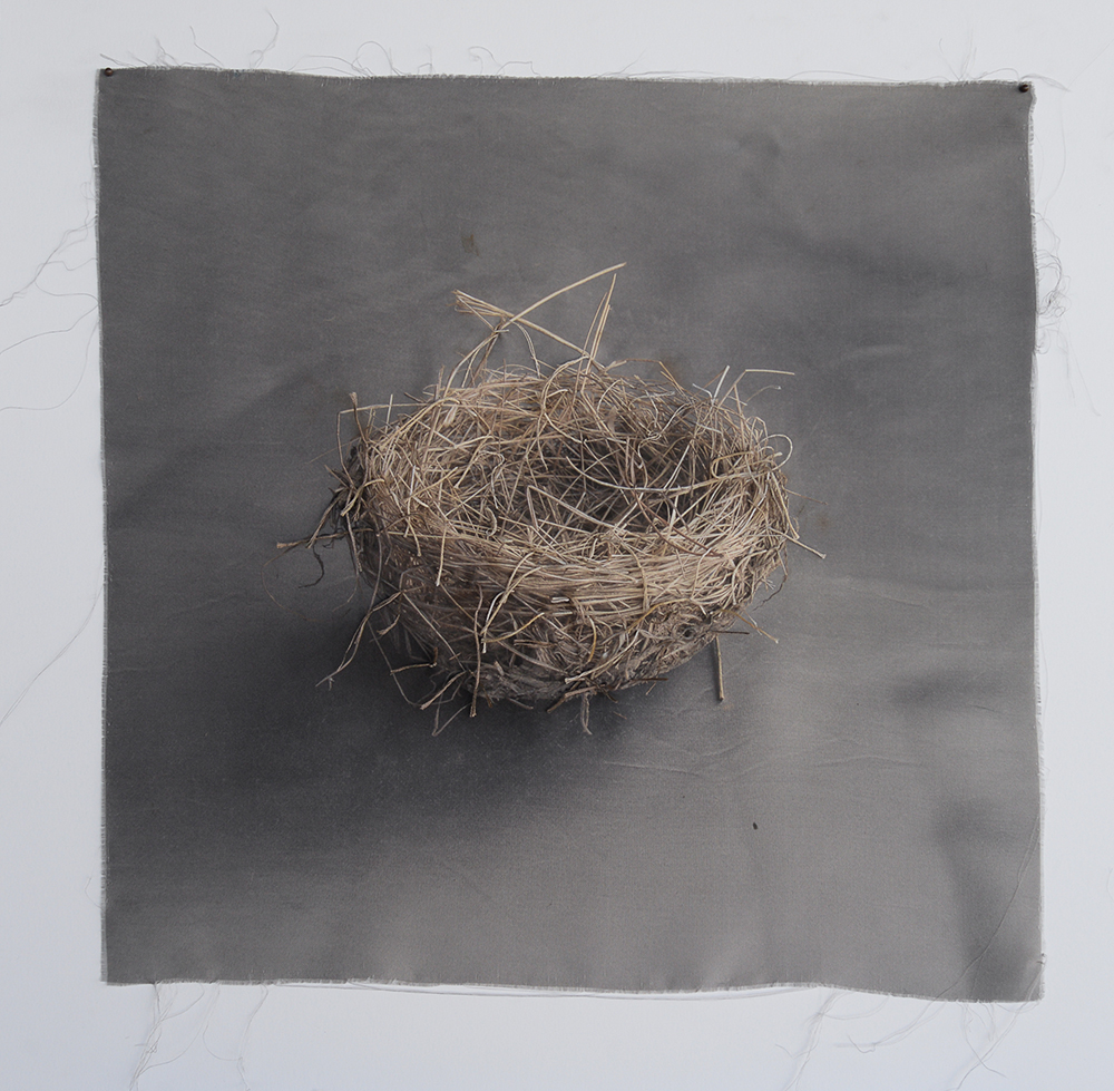 Kate Breakey, Nest 9, Catherine Couturier Gallery