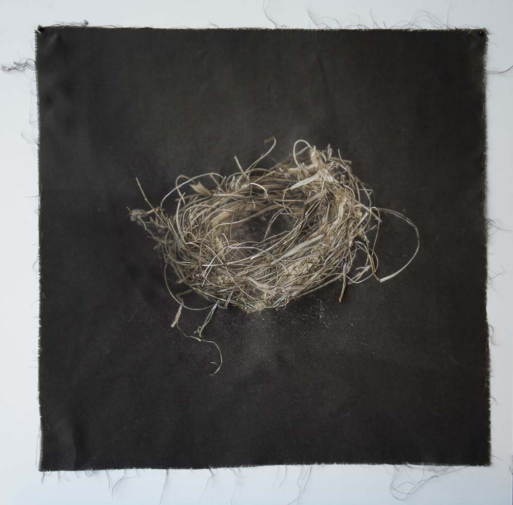 Kate Breakey, Nest 19, Catherine Couturier Gallery