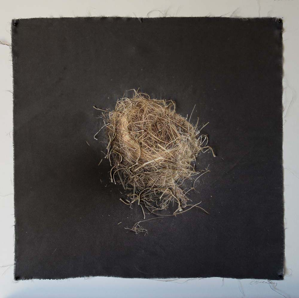 Kate Breakey, Nest 21, Catherine Couturier Gallery