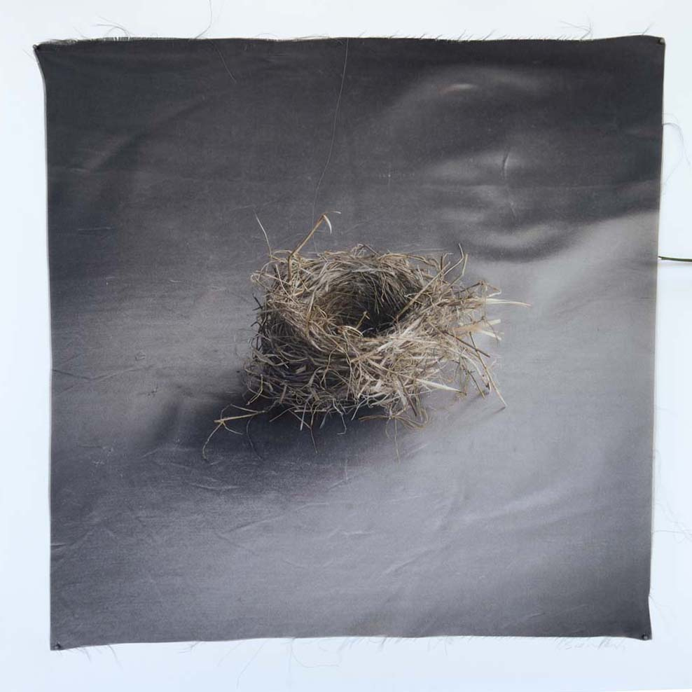 Kate Breakey, Nest 37, Catherine Couturier Gallery