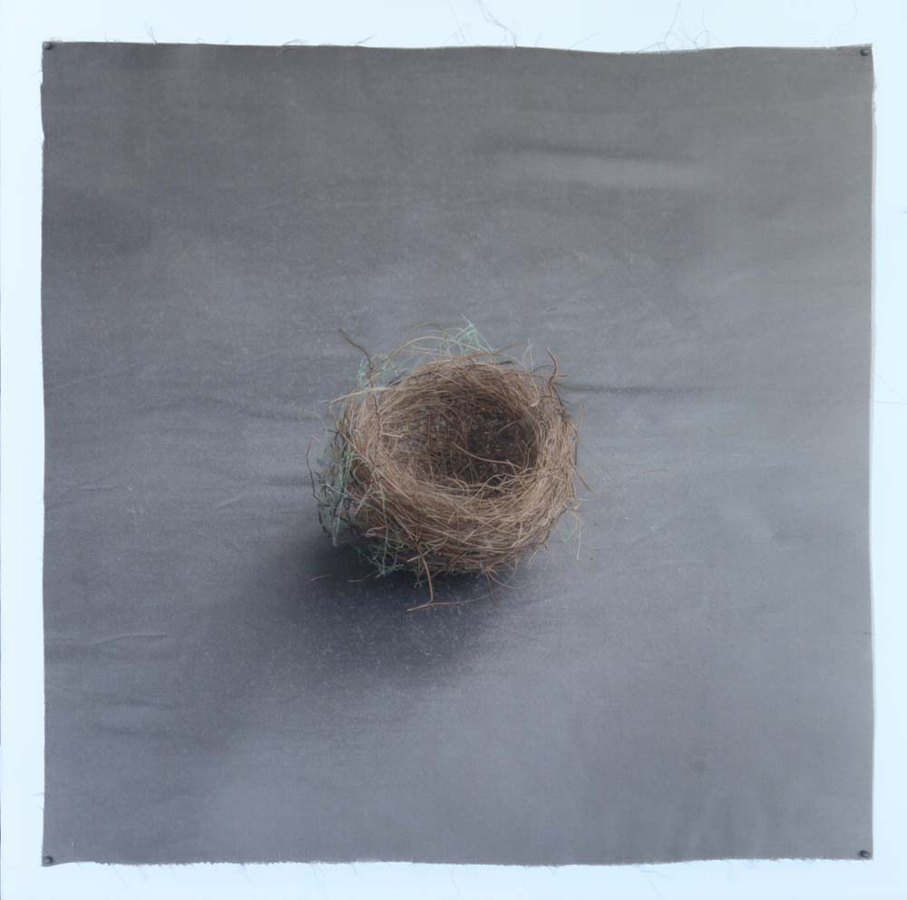 Kate Breakey, Nest 38, Catherine Couturier Gallery