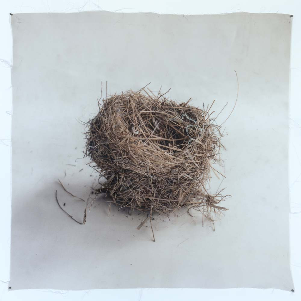 Kate Breakey, Nest 42, Catherine Couturier Gallery