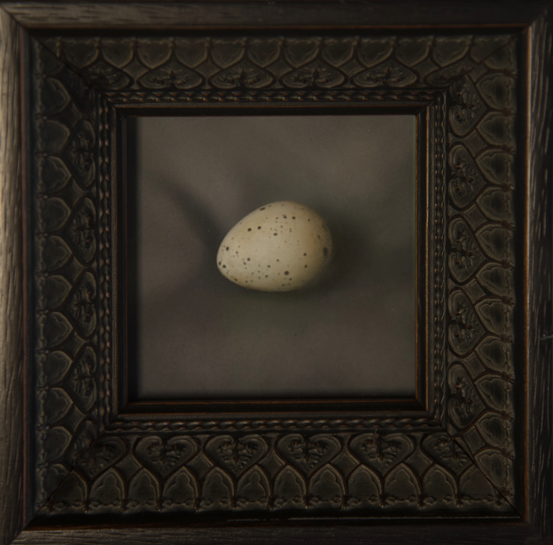 Kate Breakey, Quail Egg 21, Catherine Couturier Gallery