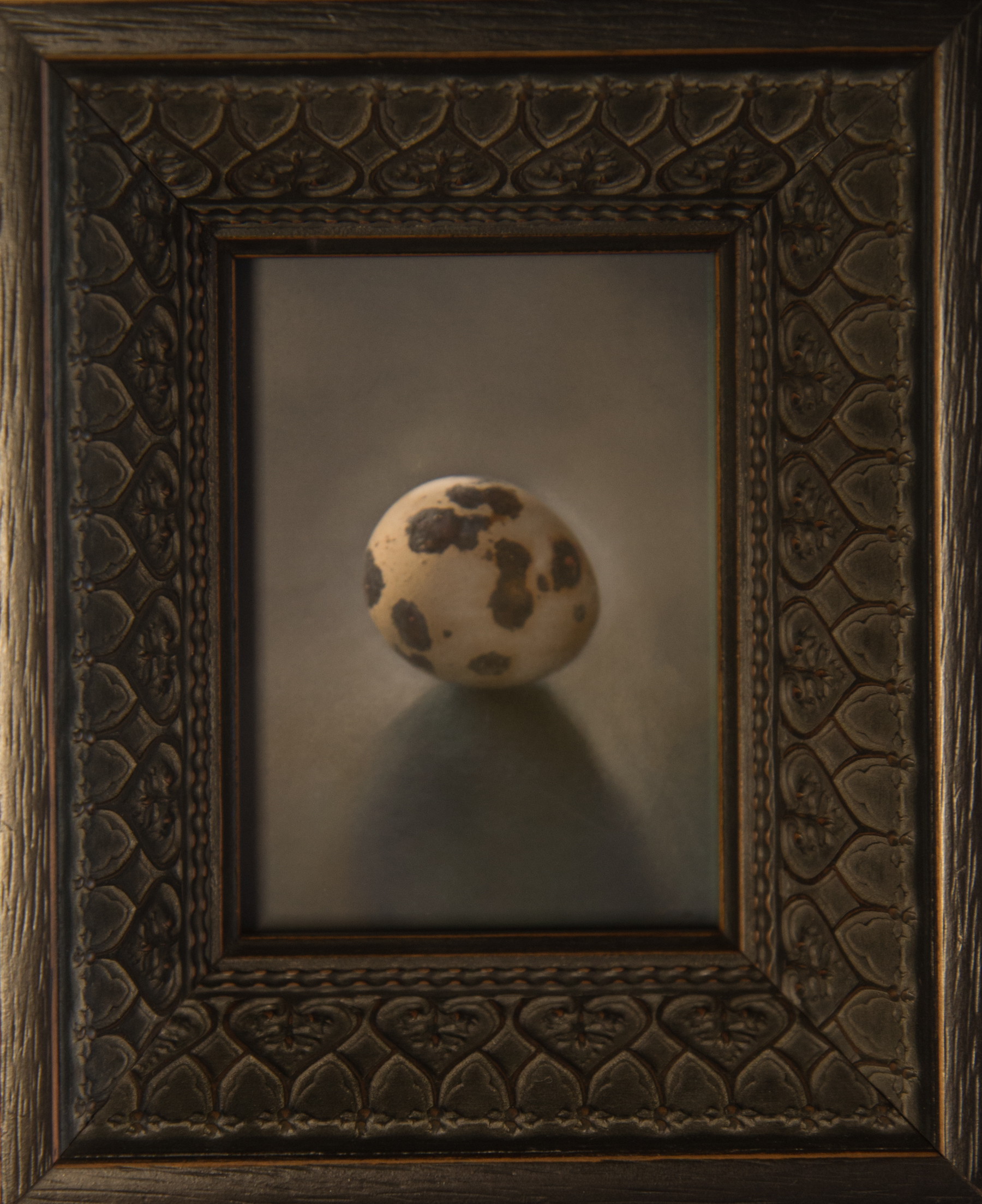 Kate Breakey, Quail Egg 42, Catherine Couturier Gallery