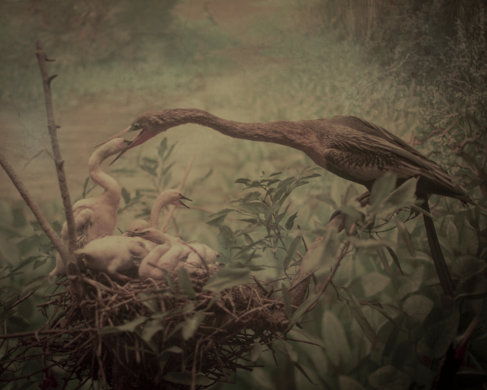 Keith Carter Egrets