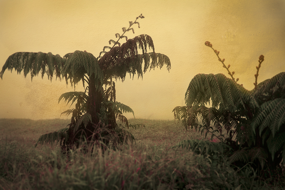 Keith Carter Fern Trees