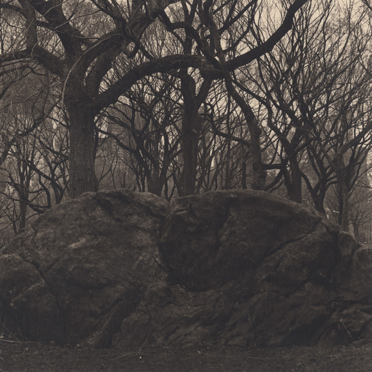 Takeshi Shikama Urban Forests - Central Park #18