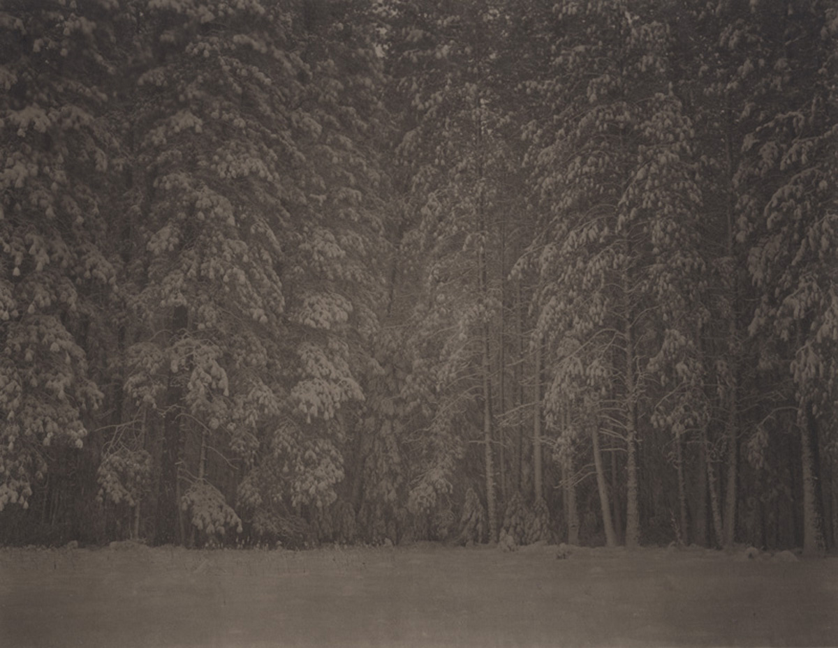 Takeshi Shikama Silent Respiration of Forests - Yosemite #10