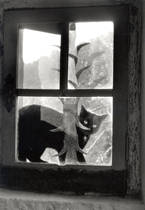 Willy Ronis - Chat devant fenetre, 1958